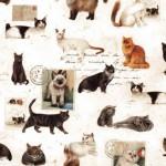 024 Katzen