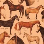 055 Pferde
