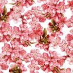 056 Pfirsichblüte
