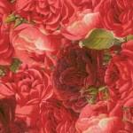 062 Rosen-rot