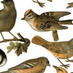 079 Vögel