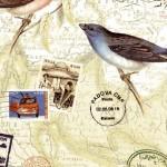 080 Vogelreise