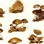 092 Pilze