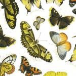093 Schmetterlinge-neu