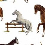 102 Pferd-im-Sprung