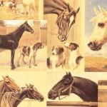 140 Pferd-und-Hund