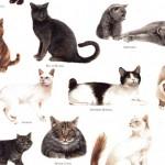 168-Katzen-mittel