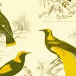 171-Vögel-groß