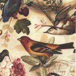 240-Kleinvögel
