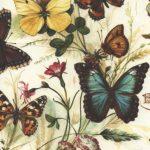 241-Schmetterlinge-Wiese
